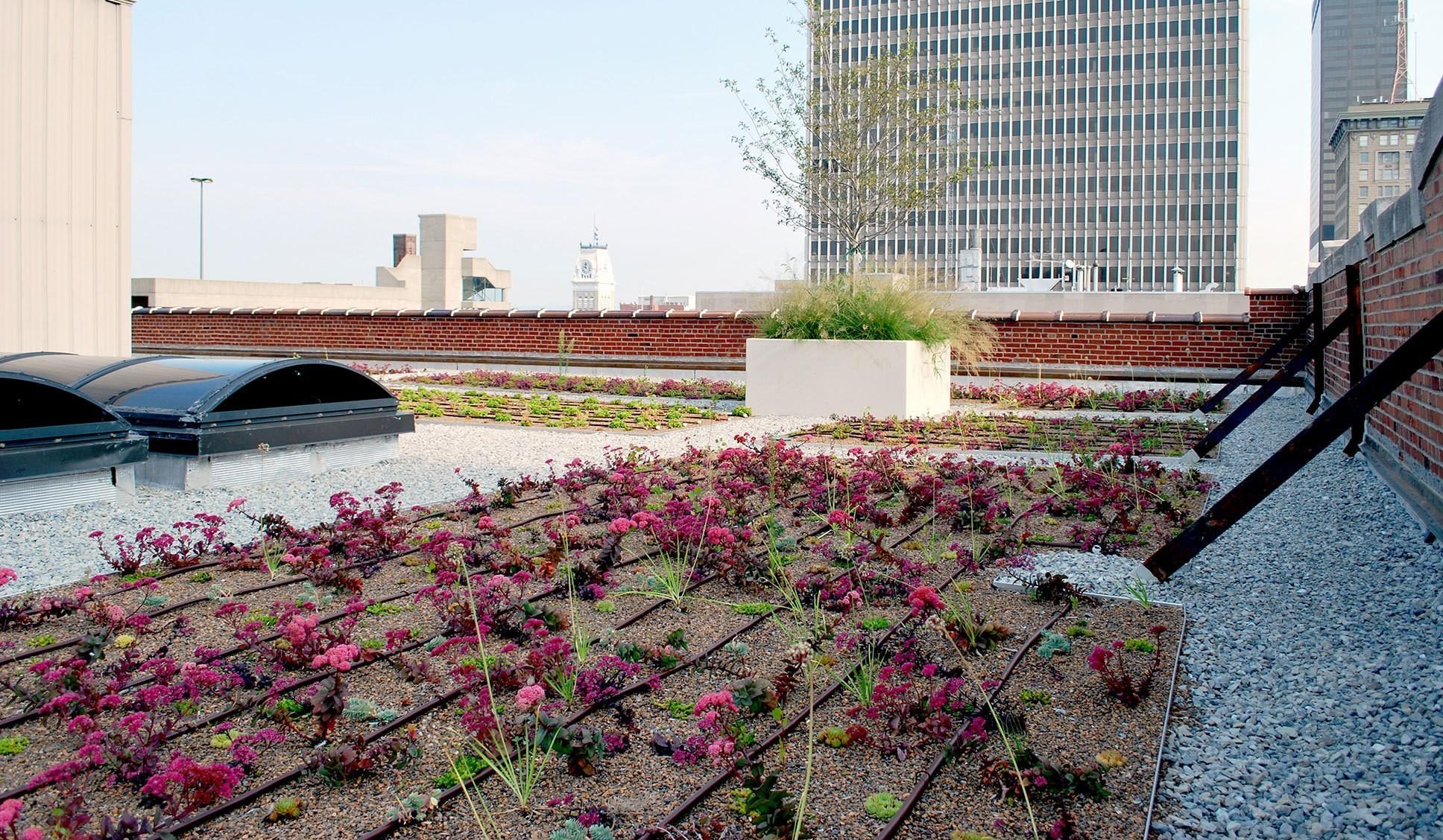 louisville-metro-government-metro-development-center-green-roof-garden